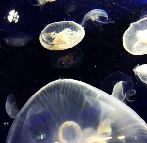 幻想的な海の世界を堪能できる冬のおたる水族館