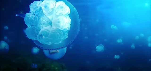 【無料歌入り音楽素材】海の映像、水族館映像などで無料で使えるフリーBGM「Aquatronica 初音ミク freeBGM Ver.」