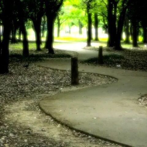 【フリーBGM】撮影した写真のスライドショー映像などに無料で使えるBGM「Path to glory」