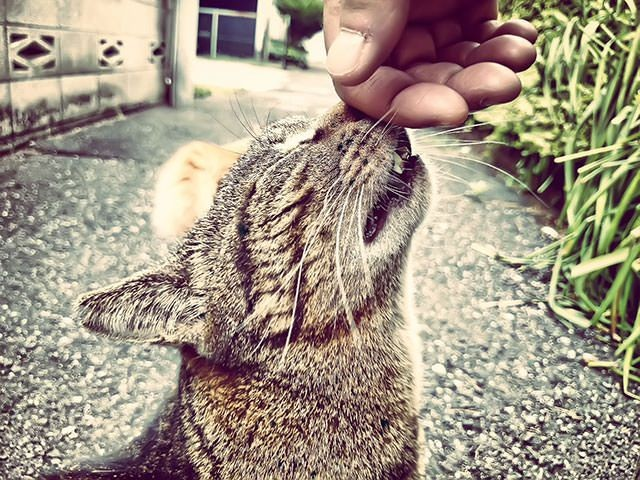 【無料音楽素材】軽快なノリのコミカルな猫系フリーBGM「ネ・コ・ミ・ミ 」