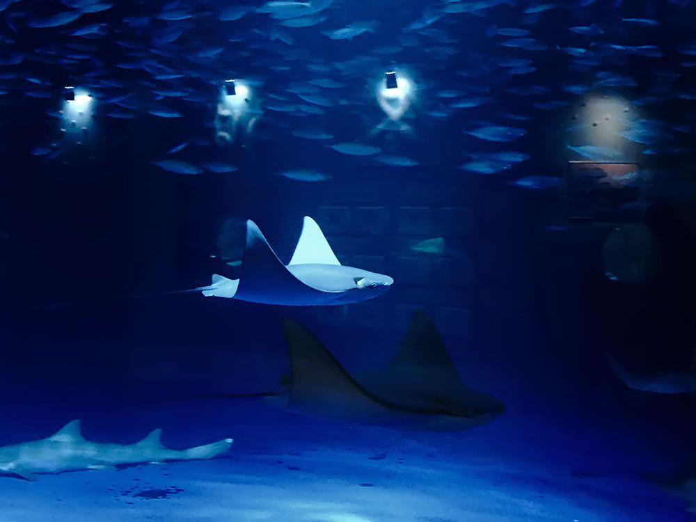 サメやエイが照明の効果で幻想的に泳いでいく様子が美しいです。