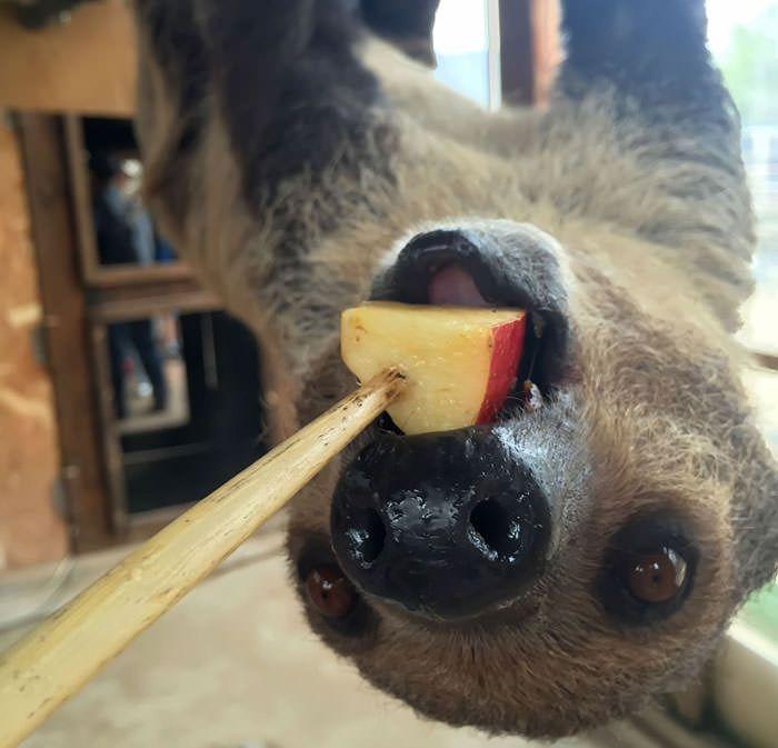 ノースサファリサッポロの魅力的な動物たちの写真など(2015年ゴールデンウィーク期間中)
