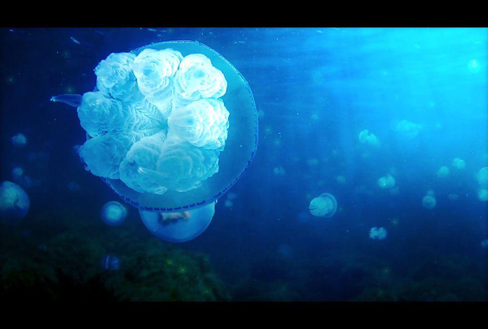 【ボカロ】初音ミクAppendの癒し系海中エレクトロニカ「Aquatronica」の楽曲ダウンロード
