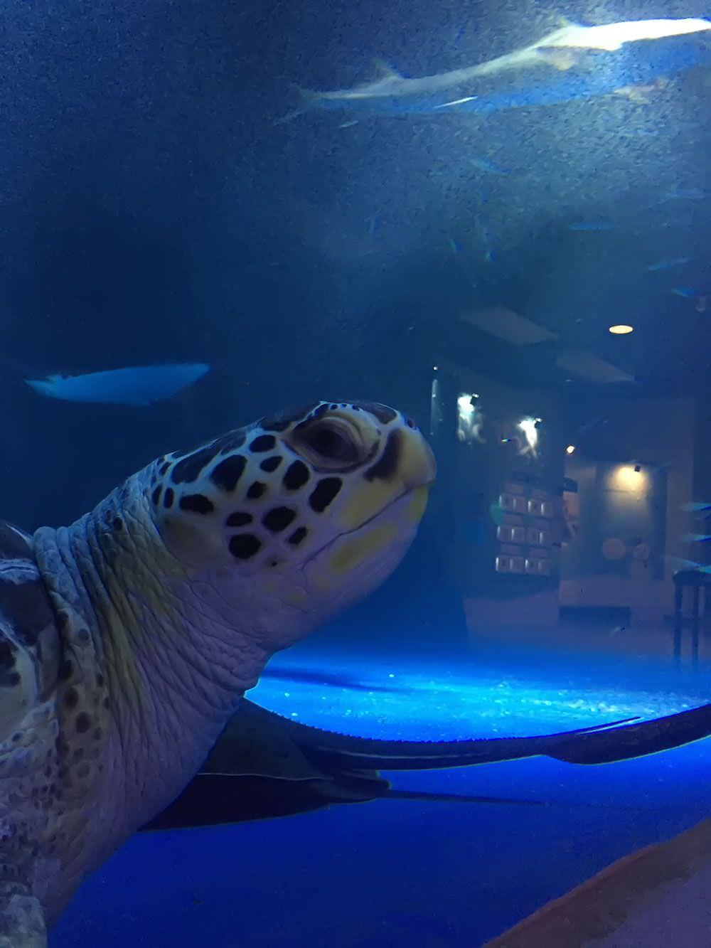 ウミガメと目が合う