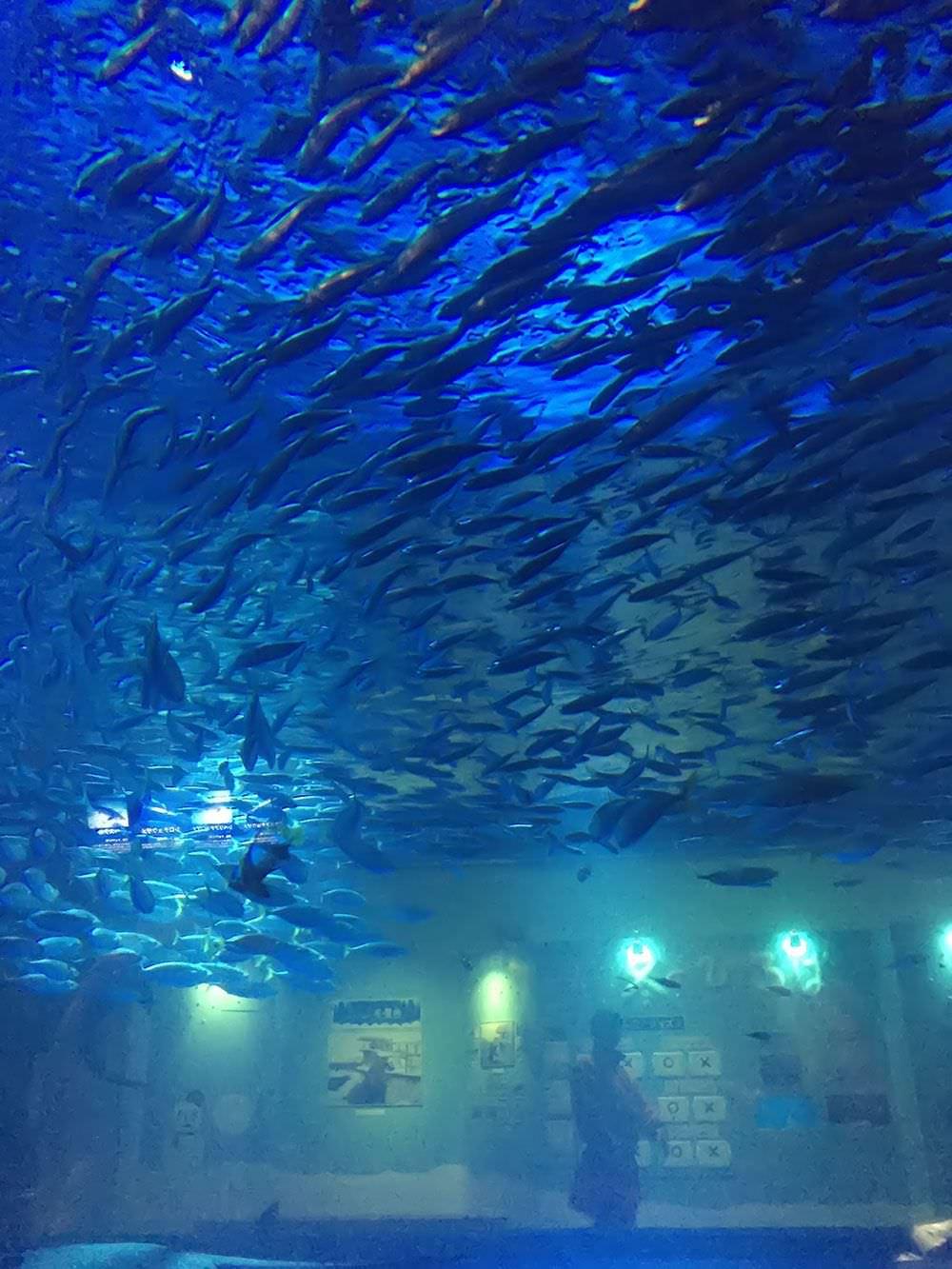 幻想的な海のパノラマ回遊水槽
